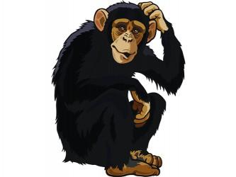Mascotte Chimpanzé en vinyle