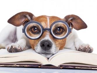 Affiche en vinyle autocollant - Le lecteur canin