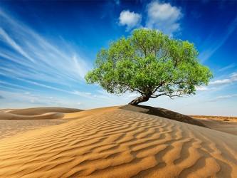 Affiche en vinyle autocollant - La vie dans le désert